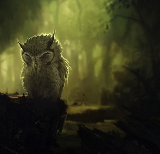 Forest and owl wallpaper